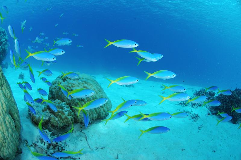 blue ocean strategy essays